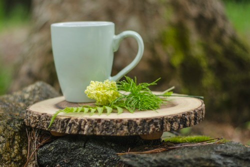 tea cup in forest