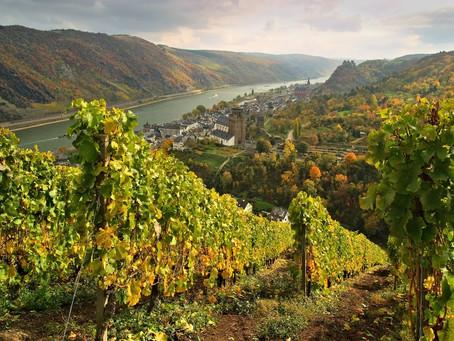 德國雷司令的榮耀:萊茵高 | The Glory of German Riesling: Rheingau