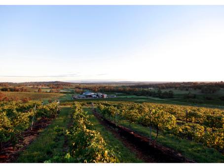 雲霧下的光輝-獵人谷遊記   Hunter Valley – wine stars under the cloud