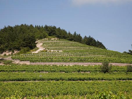 10個不可不知的希臘葡萄酒知識
