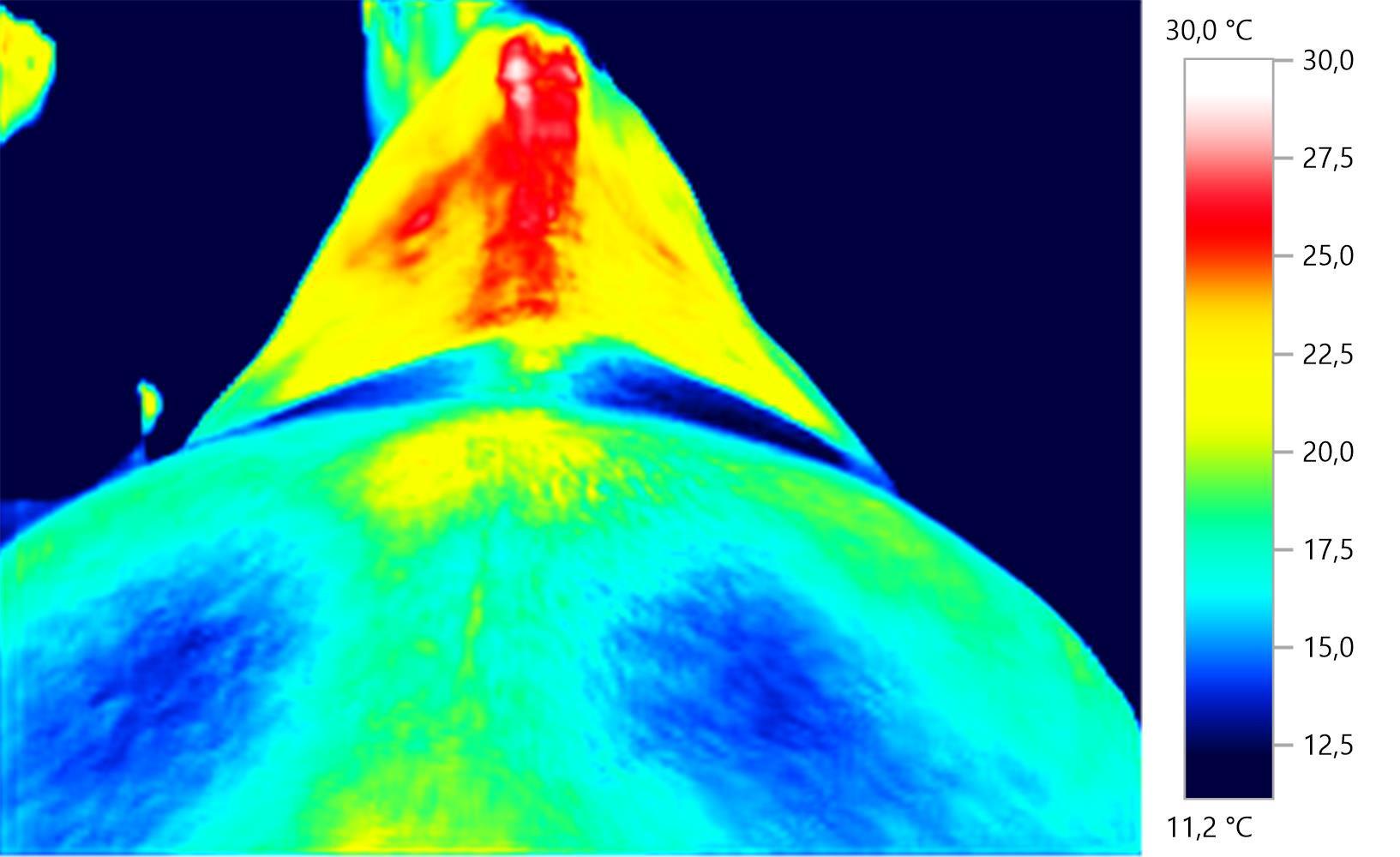 Pferdethermografie: energ Störungsmuster