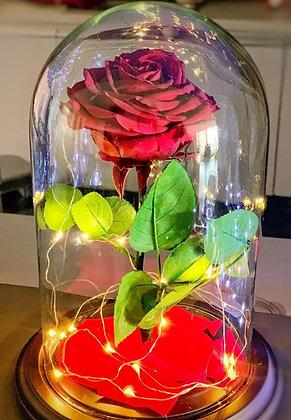 Rosa Preservada Luces