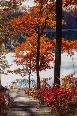 Stairs through Autumn Trees.jpg