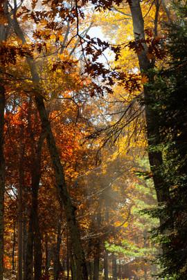 Sun through Trees in Autumn.jpg