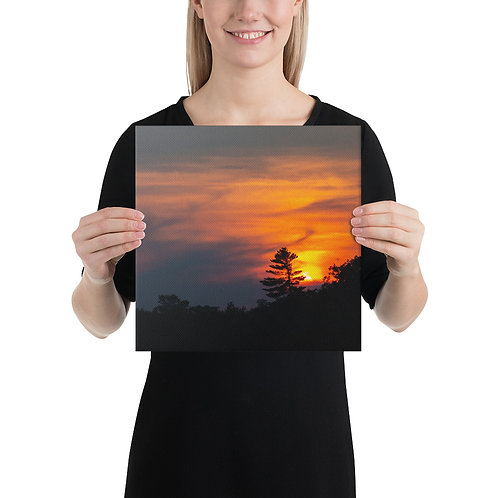 Sunset on a Pine in Moose Lake MN - Canvas