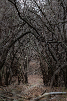 Tunnel of branches.jpg