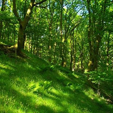 Tree survey South Wales