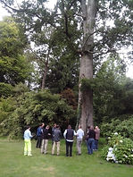 Tree survey West Wales