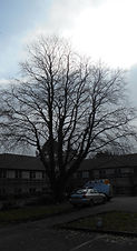 Tree survey Bridgend