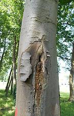 Tree survey Swansea