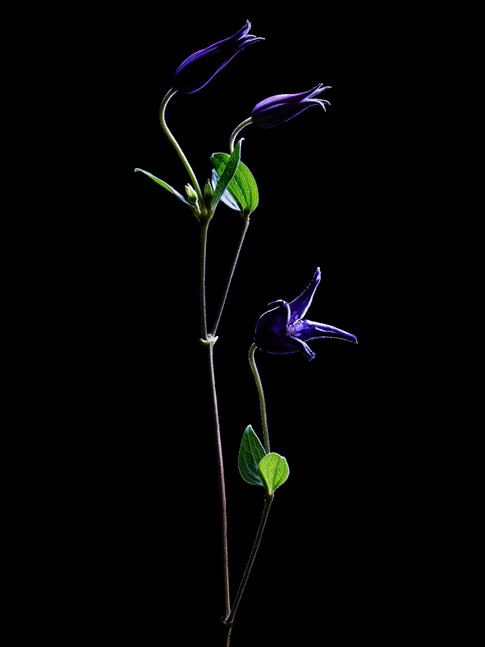 Fabrice Bouquet