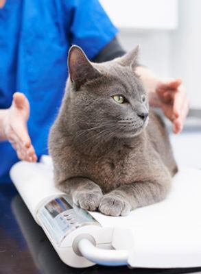 cat on scales.jpg