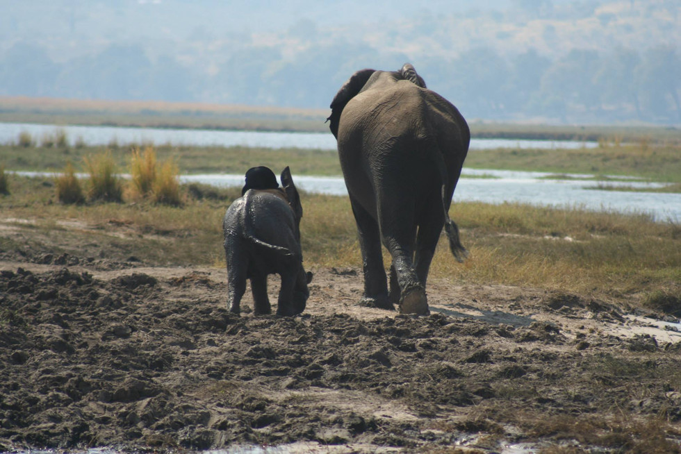 Guns, drugs and ivory: an elephants tale of survival