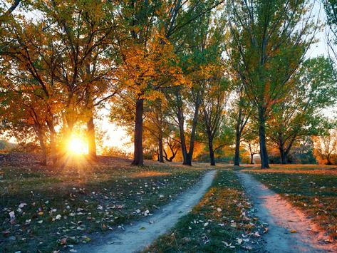 Yolcu, Ağaç ve Döngü