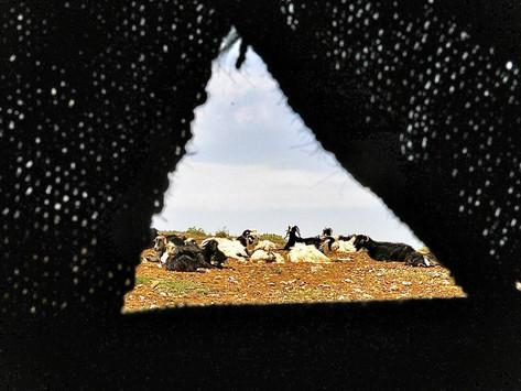 Baharın Çocukları; Son Göçer Çobanlar