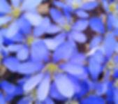 April NY MA1.jpg