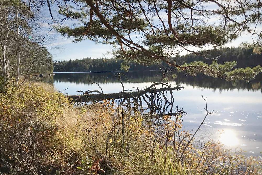 Naturkraft Eskilstuna listar fördelarna med tystnad. Att vara två timmar i tystnad är bra för dig och naturliga ljud mår du mycket bättre av än ljud från exempelvis trafik.