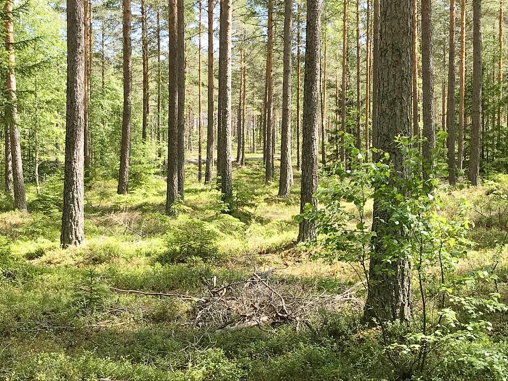 Stressterapi i naturen, gå din väg och få naturkraft