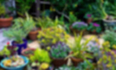 San Francisco gardener, Green Earth Gardeners