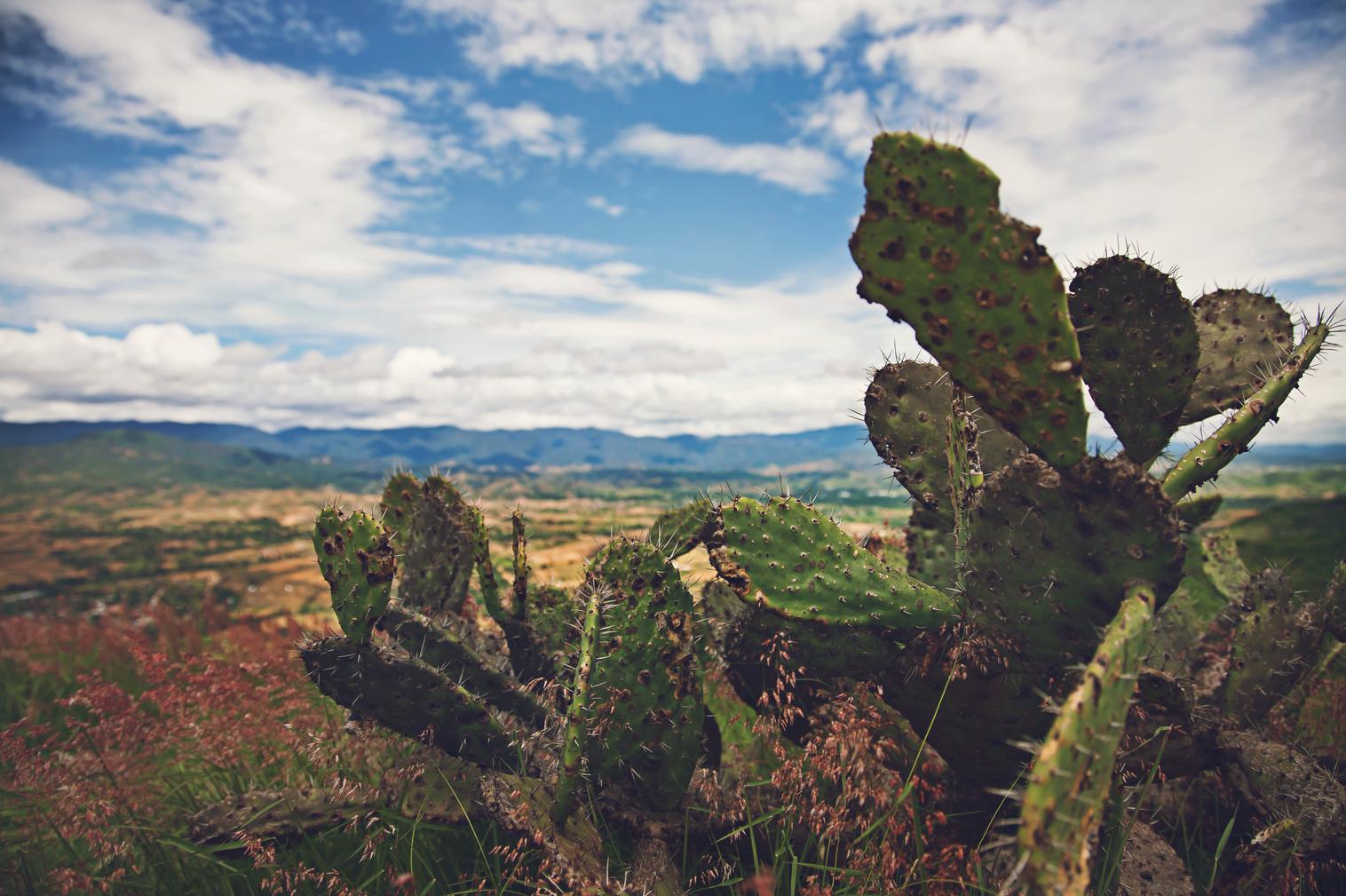 Javier_Montes_dArce_Mexico_33_Efímero.pn