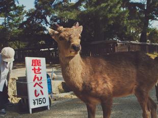 Nara, Japan. 2012