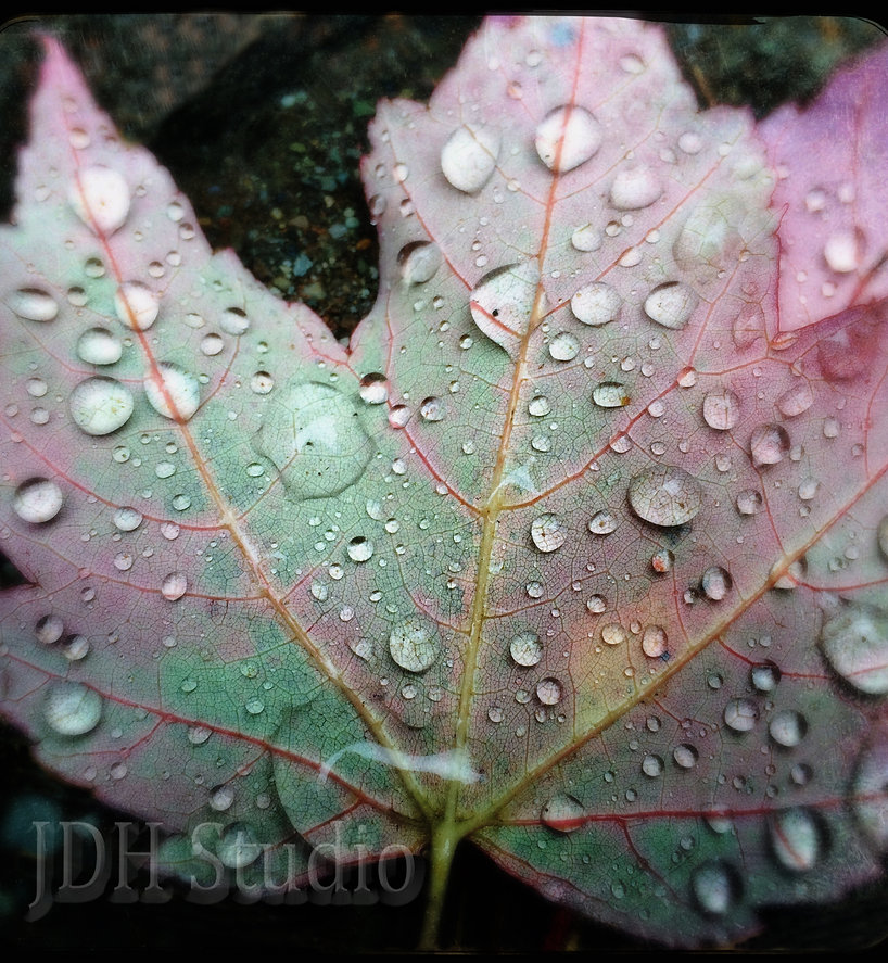 leaf bubble mark copy copy.jpg