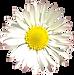 Blume-hinten-transp.png