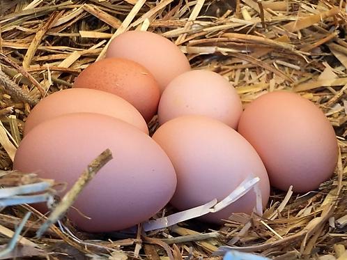 Huevos organicos x 12