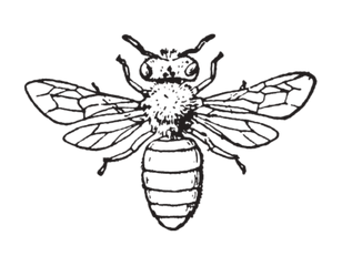 bee%20logo_edited.png