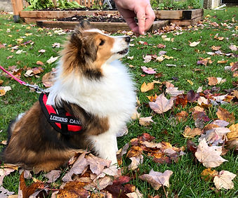 Prudshelties Lets chat Dany (Rosie)