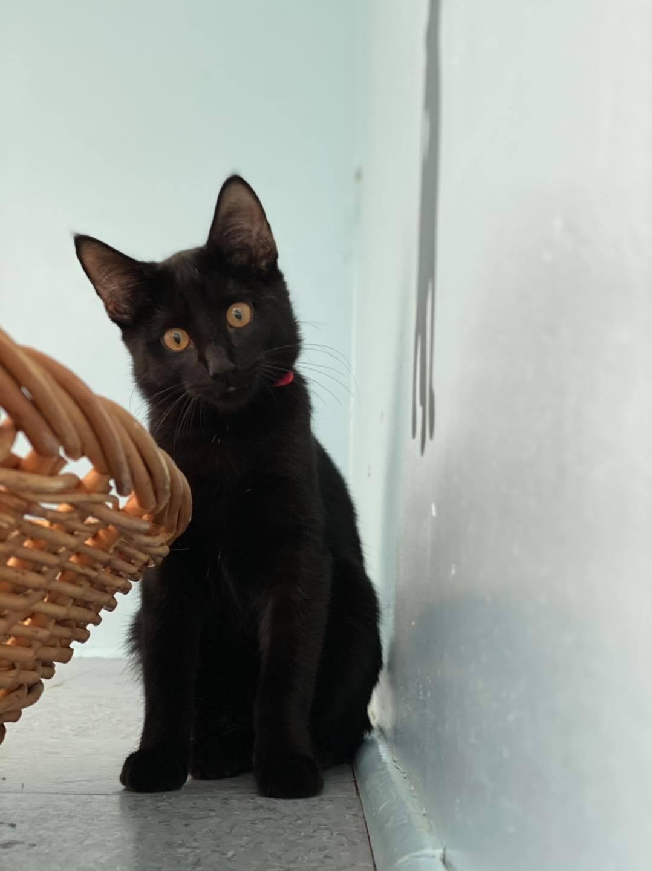 New Fairfield Sherman Animal Welfare Nfsaw Danbury Adopt