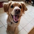 dog mix.jpg