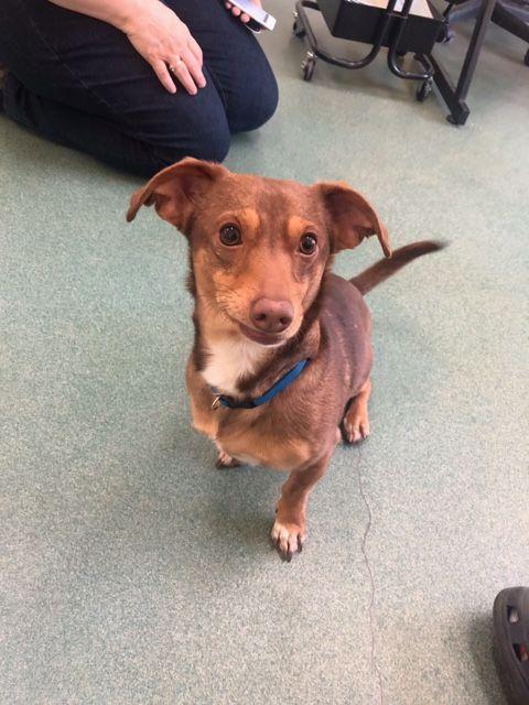 Pogo ~ Foster to Adopt!