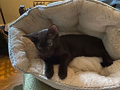 Meow 6.jpg