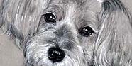 Shawnalee - dog.jpg