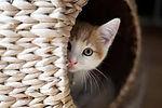 Cat in home.jpg