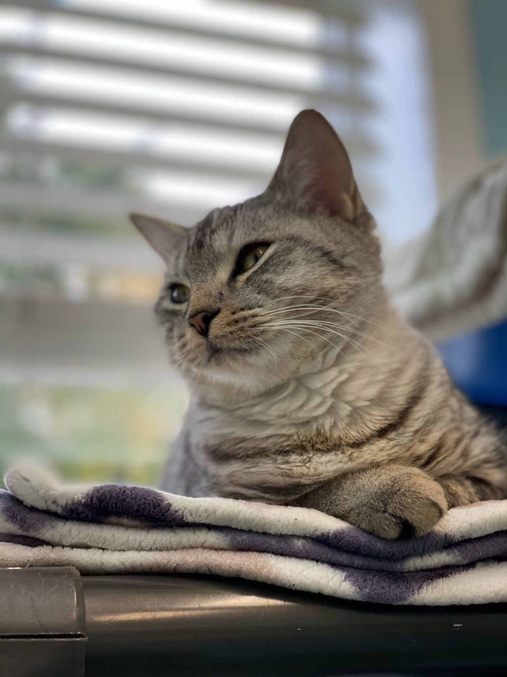 Wynonah ~ ADOPTED!