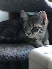 kitten 18.jpg