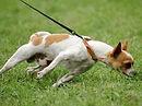 Dog pulling.jpg