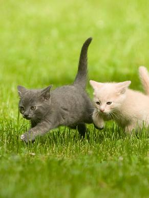 Kitten Around 5K - website.png