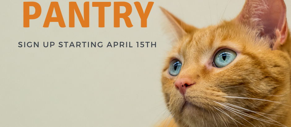 Cat Food Pantry