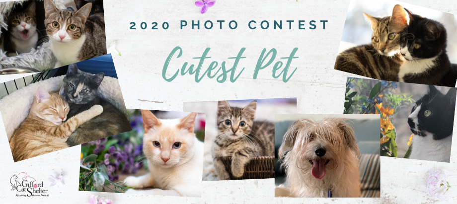 Cutest Pet Photo Contest 2020