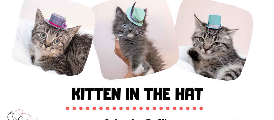 Kitten In The Hat Raffle is coming!