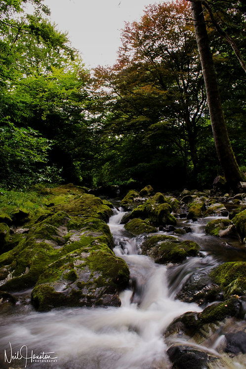 Tullymore Forest Park