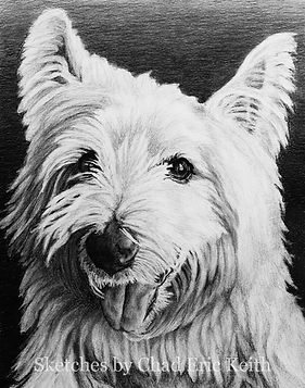 Pet portrait artist offering personalized sketches drawn from your photograph
