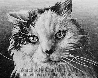 Cat drawing, cat sketch, pencil drawing of cat,