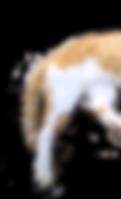 cat butt.png