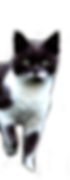 standing cat.png