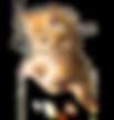 shoulder cat.png