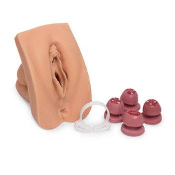 Colleen Cervical Procedure Trainer